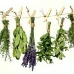gyógynövények az alternatív gyógyításban